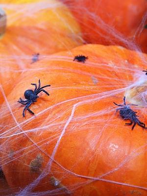 10 gab, Zirnekļi, 3x3 cm