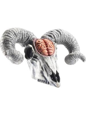 Lateksa auna galvas kauss, 33 x 20 x 19 cm