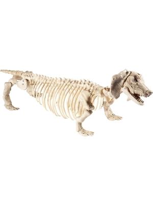 Suņa skelets, 55 cm x 13 cm x 30 cm