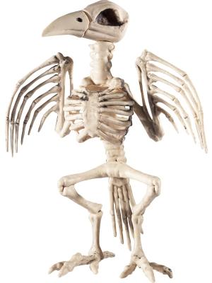 Kraukļa skelets, 21 cm x 20 cm x 30 cm