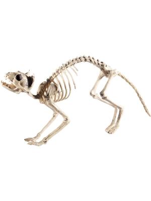 Kaķa skelets, 60 cm x 12 cm x 25 cm